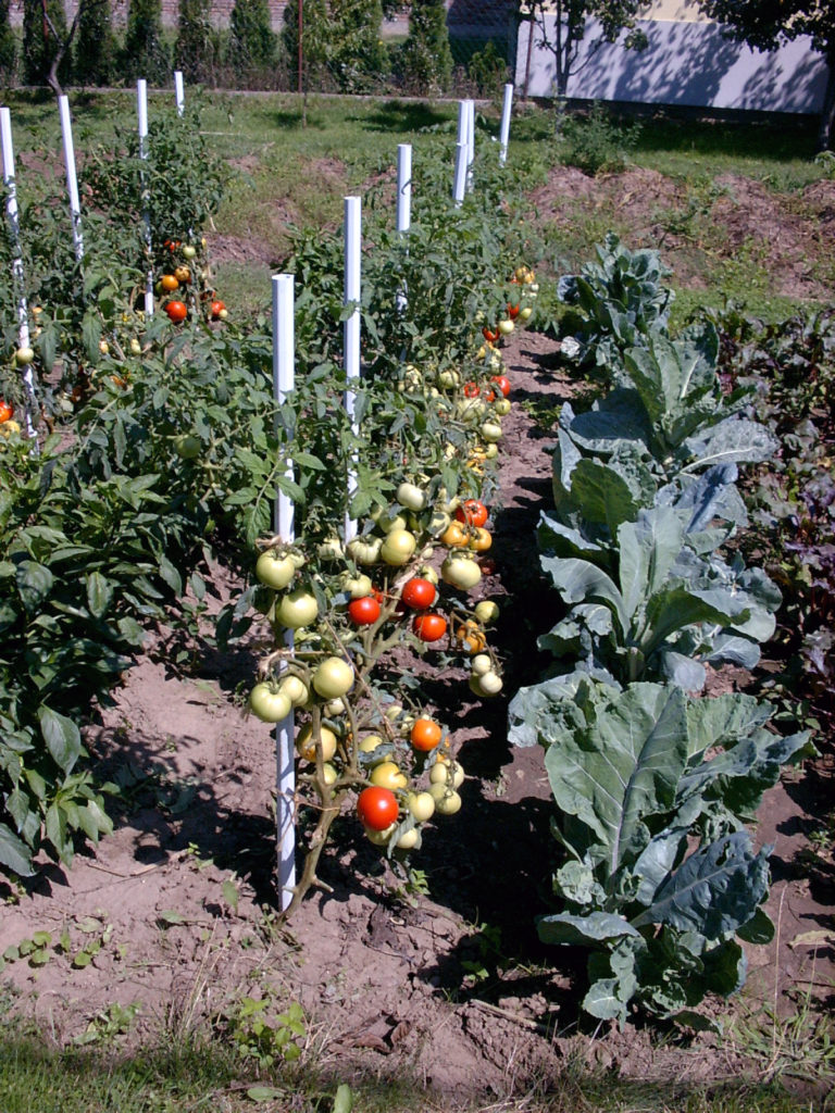 PVC poles for vegetables
