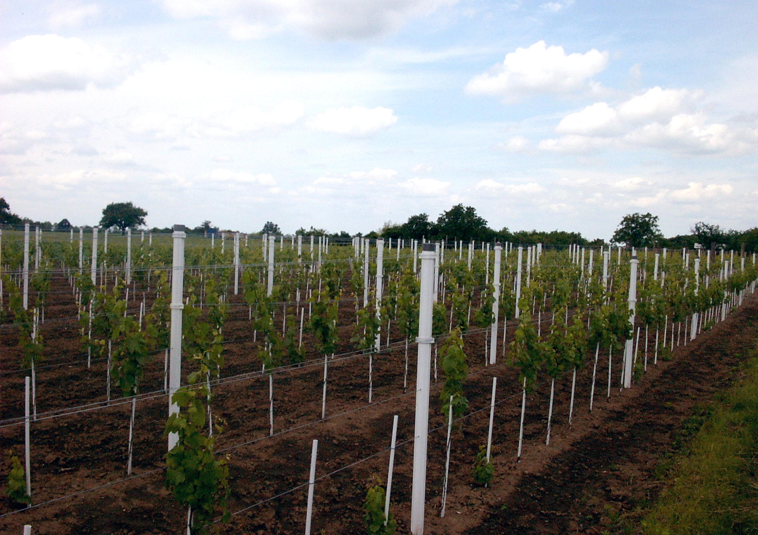 PVC stupovi za mlade voćke