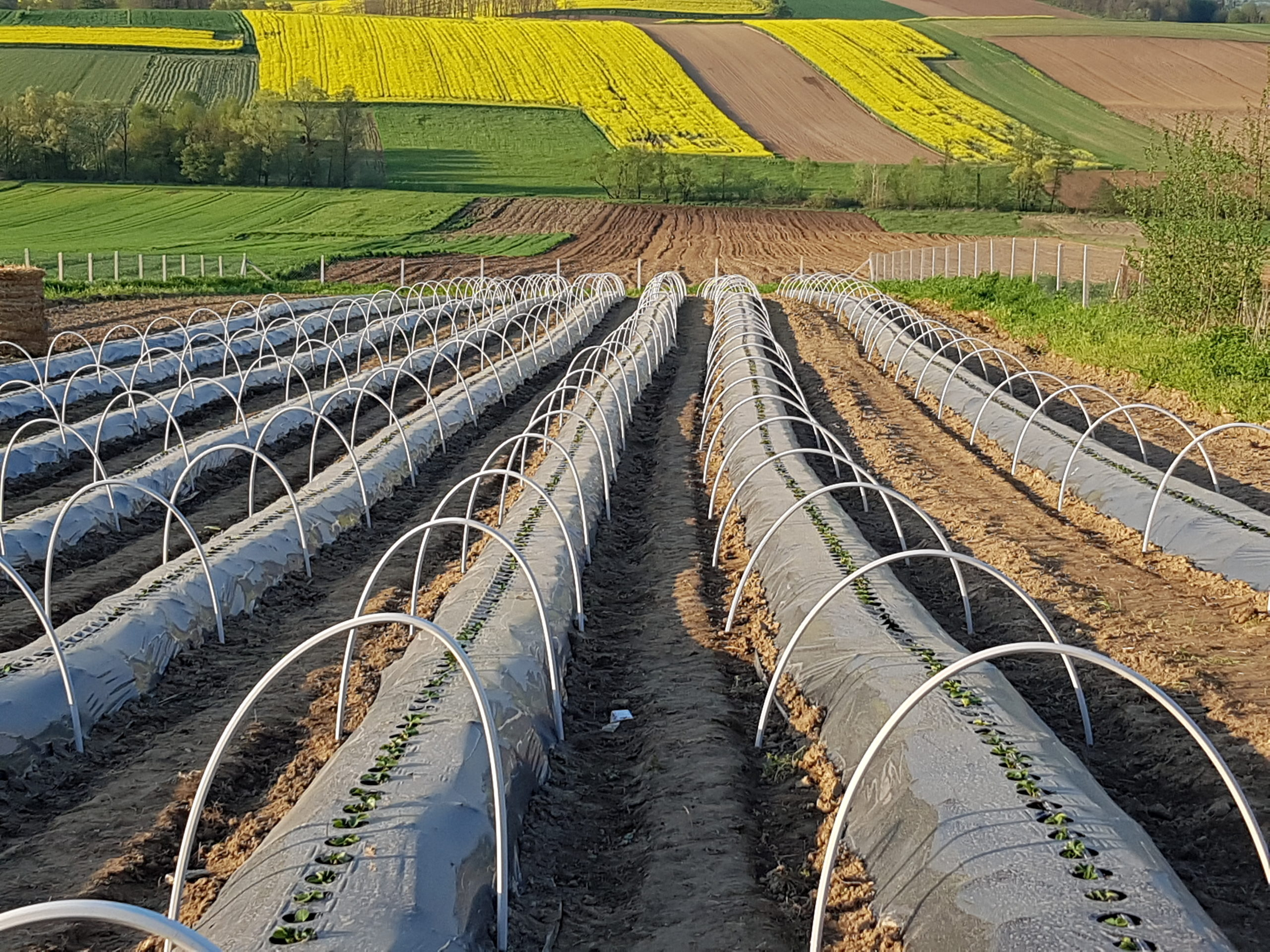 PVC greenhouses