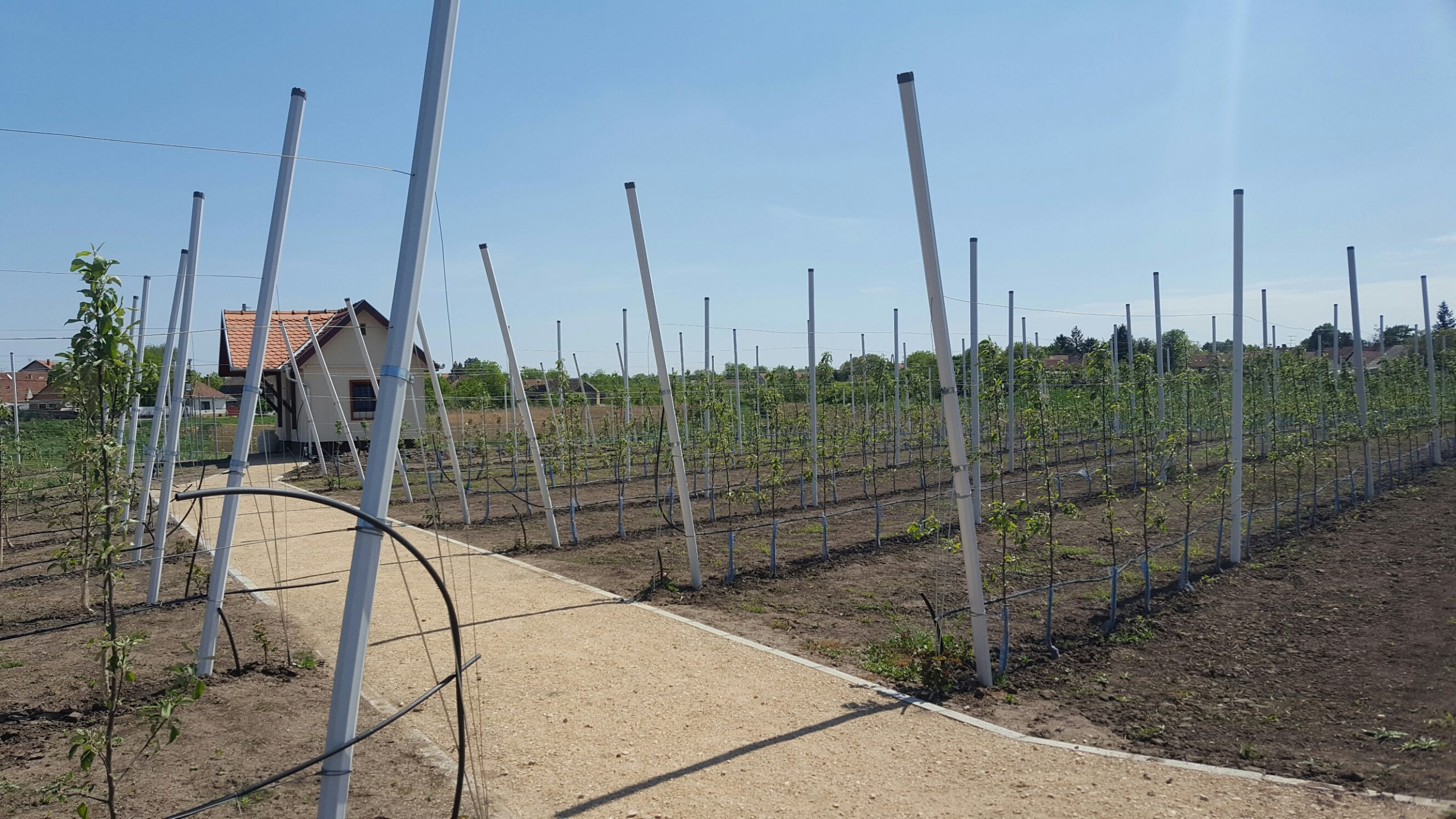 Orchard with PVC poles