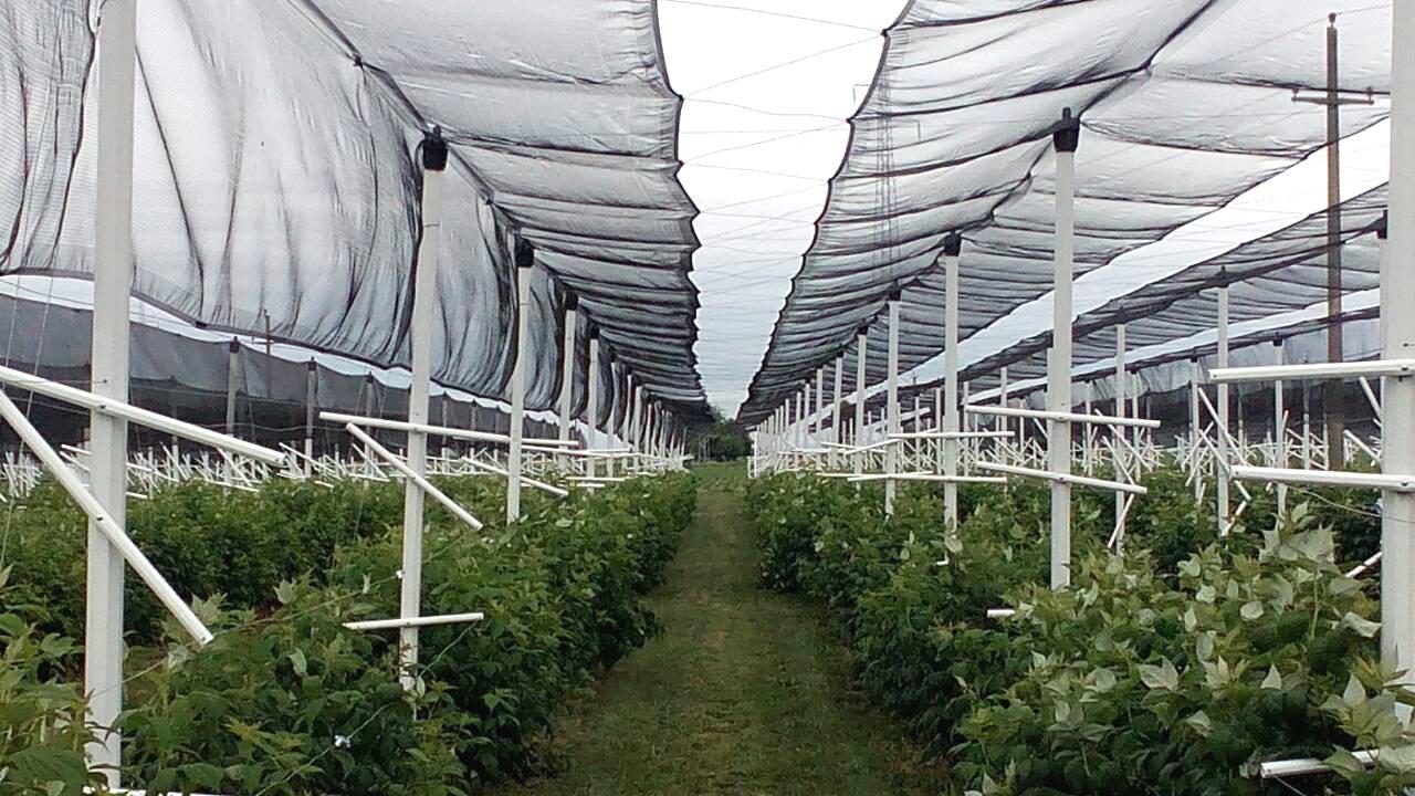 PVC stupovi za protugradnu mrežu
